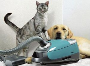 dog and cat with vaccum